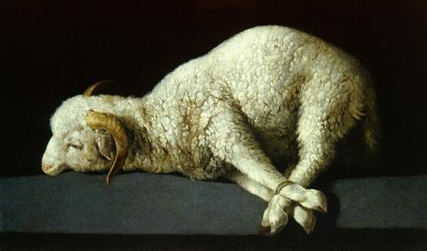 lamb-zurb